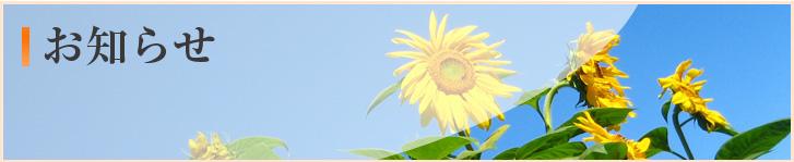 今月のお花【紫陽花】(三和園・茜)
